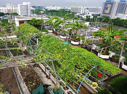 City Urban Farming