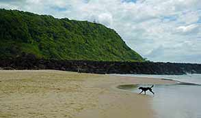 /Palm-Beach-Off-Leash-Area